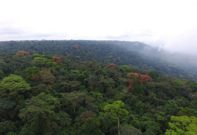 Atewa Forest: A Hotspot for Nature Based Solutions
